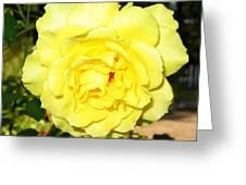 Upbeat Yellow Rose Greeting Card