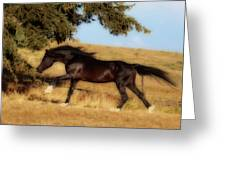 Uphilll Gallop Greeting Card