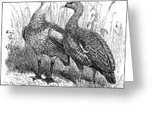 Upland Geese Greeting Card
