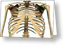 Upper Torso Bones, Artwork Greeting Card