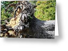 Uprooted By The Storm Greeting Card
