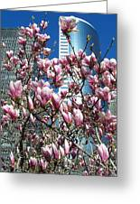 Urban Dogwoods Greeting Card