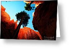 Utah - Navajo Loop 4 Greeting Card by Terry Elniski