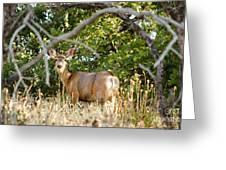 Utah Mule Deer Greeting Card
