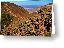 Valle Del Desierto Greeting Card