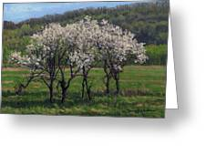 Valley Plum Thicket Greeting Card