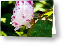 Vari Rose Greeting Card