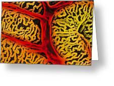 Vascular System Of The Epididymis Greeting Card