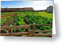 Vegetable Farm Greeting Card by Carlos Caetano