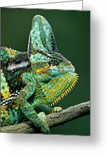 Veiled Chameleon Chamaeleo Calyptratus Greeting Card