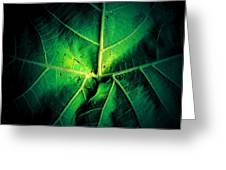 Veins Of A Sycamore Leaf Greeting Card