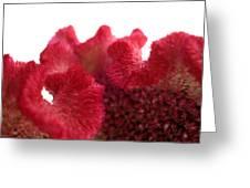 Velvet Bloom Greeting Card