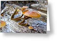 Velvet Foot Mushroom - Flammulina Velutipes Greeting Card