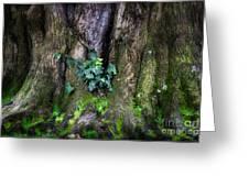 Velvet Ivy Greeting Card