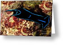 Velvet Sea Slug Greeting Card