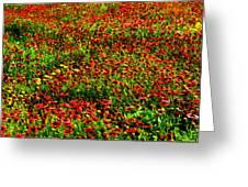 Velvet Spring Greeting Card