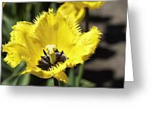 Venus Flytrap Tulip Greeting Card