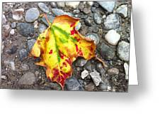 Vermont Foliage - Leaf On Earth Greeting Card