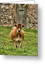 Vernon County Cow Greeting Card
