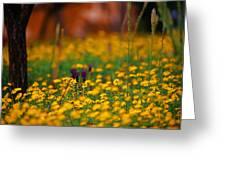 Vesuvius Wildflowers Greeting Card