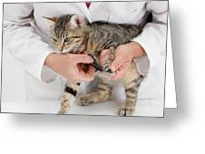 Vet Clipping Kittens Claws Greeting Card