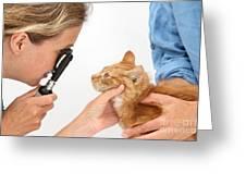 Vet Examining Kitten Greeting Card