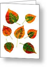 Vibrant Autumn Leaves Greeting Card