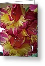 Vibrant Gladiolus Greeting Card by Susan Herber