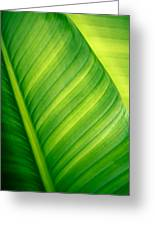Vibrant Green Leaf Greeting Card