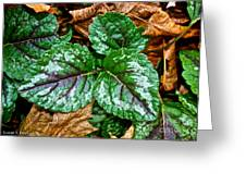 Vibrant Ground Cover  Greeting Card