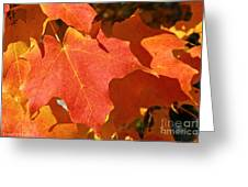 Vibrant Maple Greeting Card