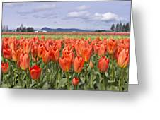 Vibrant Orange Spring Greeting Card