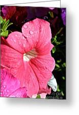 Vibrant Petunias Greeting Card