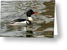 Vibrant Red Breasted Merganser At The Lake Greeting Card