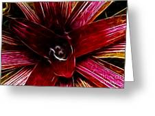 Vibrant Succulent  Macro Greeting Card