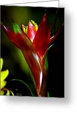 Vibrantly Rich In Red Greeting Card