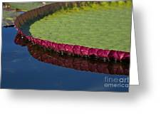 Victoria Amazonica Leaf Greeting Card