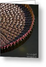 Victoria Amazonica Leaf Vertical Greeting Card