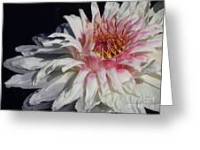 Victoria Water Lily Greeting Card