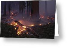 View Of A Controlled Fire In A Stand Greeting Card
