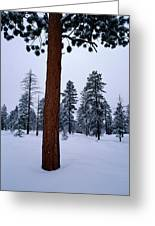 View Of A Ponderosa Pine Surrounded Greeting Card