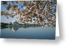 View Of Cherry Blossoms Greeting Card