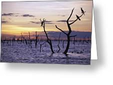 View Of Lake Kariba At Sunset Greeting Card