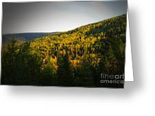 Vignette Of Autumn Gold  Greeting Card
