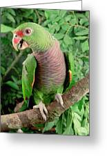 Vinaceous-breasted Parrot Amazona Greeting Card