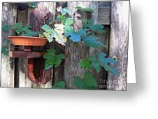 Vine And Feeder Greeting Card