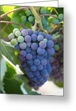 Vine Ripe Greeting Card