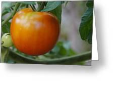 Vine Ripe Tomato Greeting Card
