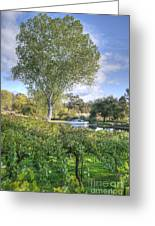 Vines And Trees Greeting Card