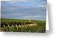 Vines In Burgundy. France Greeting Card